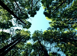 Life-of-Pix-free-stock-photos-trees-sky-forest-mikewilson